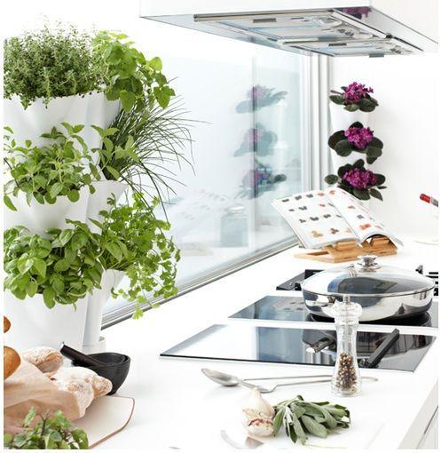 Tener un Huerto vertical en Cocinas de cualquier tamaño