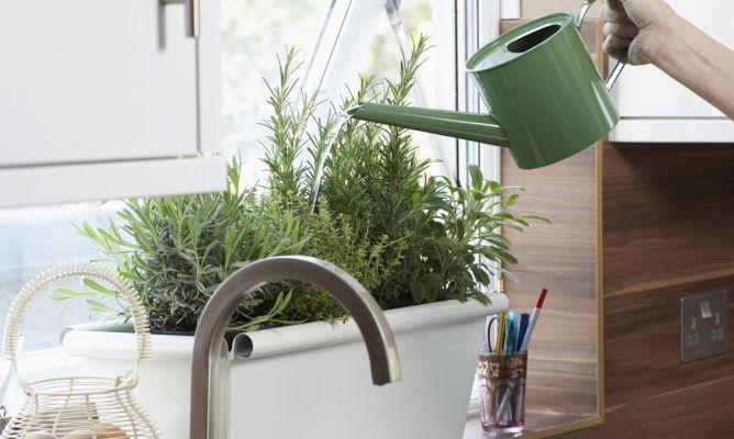Decoración de interiores con plantas aromáticas