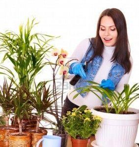 10778732-mujer-cuidando-de-planta-de-interior-en-casa