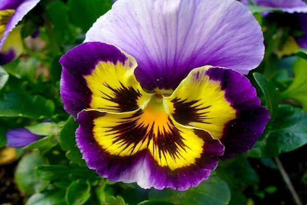 FLORES De INVIERNO Para Alegrar Y Dar Color A Tu Balcón O Jardín