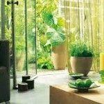 Plantas que relajan