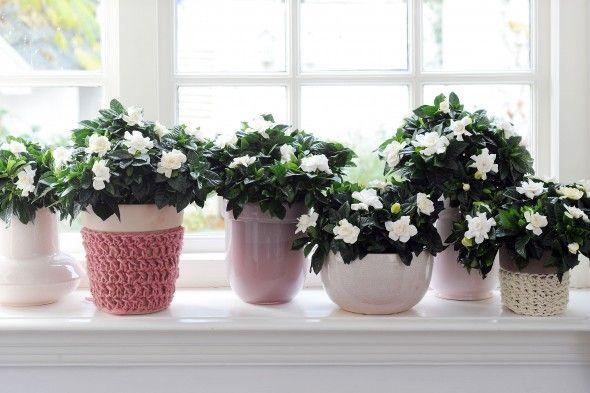 Decorar tu Casa con Gardenias