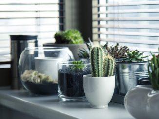 FENG SHUI: usos de los cactus